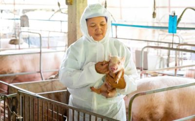 What pig farmers can teach us about stopping coronavirus with tech